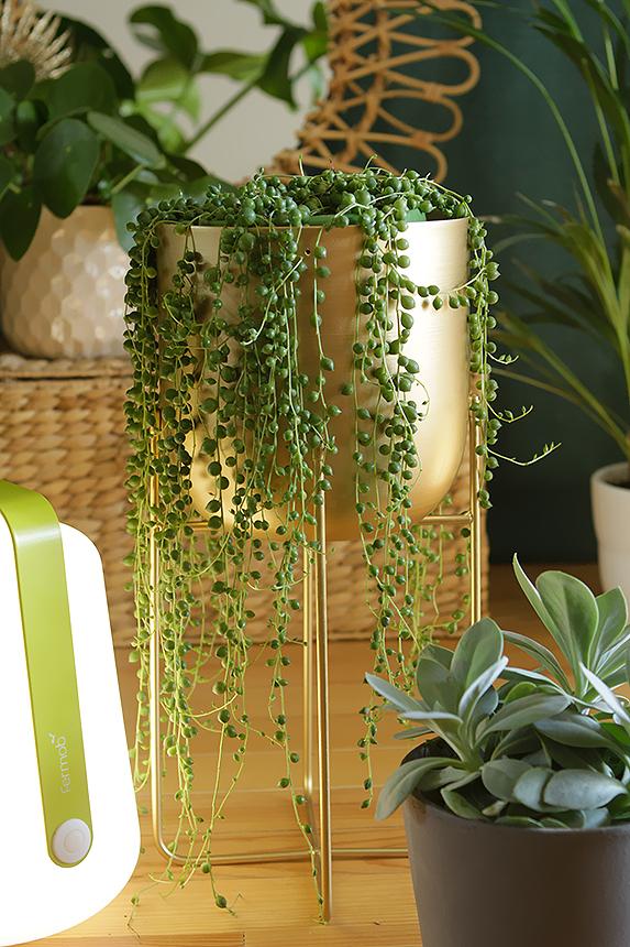 d co v g tale les plantes tendances 2017 2018 le grand petit monde fermob blog mobilier. Black Bedroom Furniture Sets. Home Design Ideas